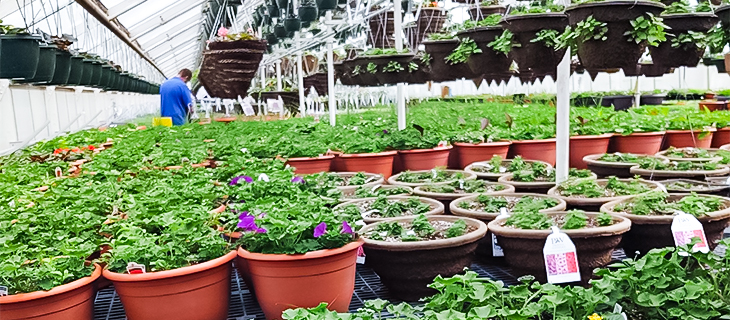 Waukesha Floral Greenhouse