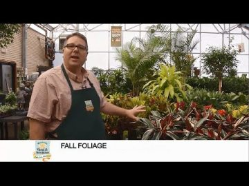Fall Foliage for Decorating Your Home