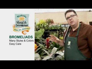 Bromeliads, Bromeliads, Bromeliads!