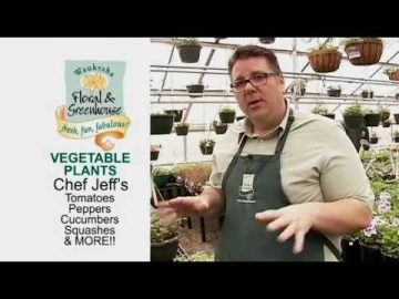 Take a Bite Out of Vegetable Plants