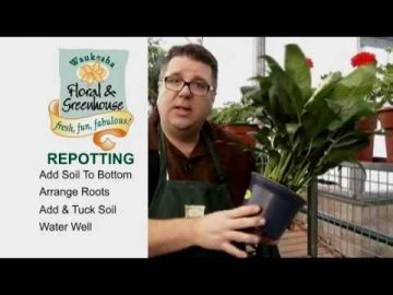 Potting Tips for Perfect Flowers