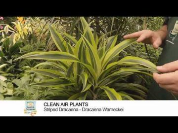 Plants That Help Purify the Air
