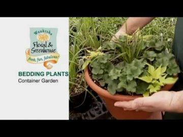 Container Gardens for Gardens & Patios
